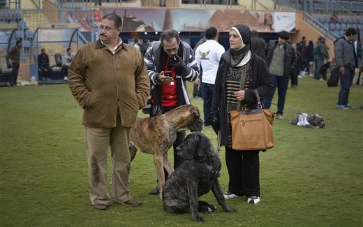 أمن مصر في عهدة الكلاب