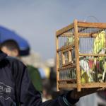غزة تتاجر بالطيور أيضاً