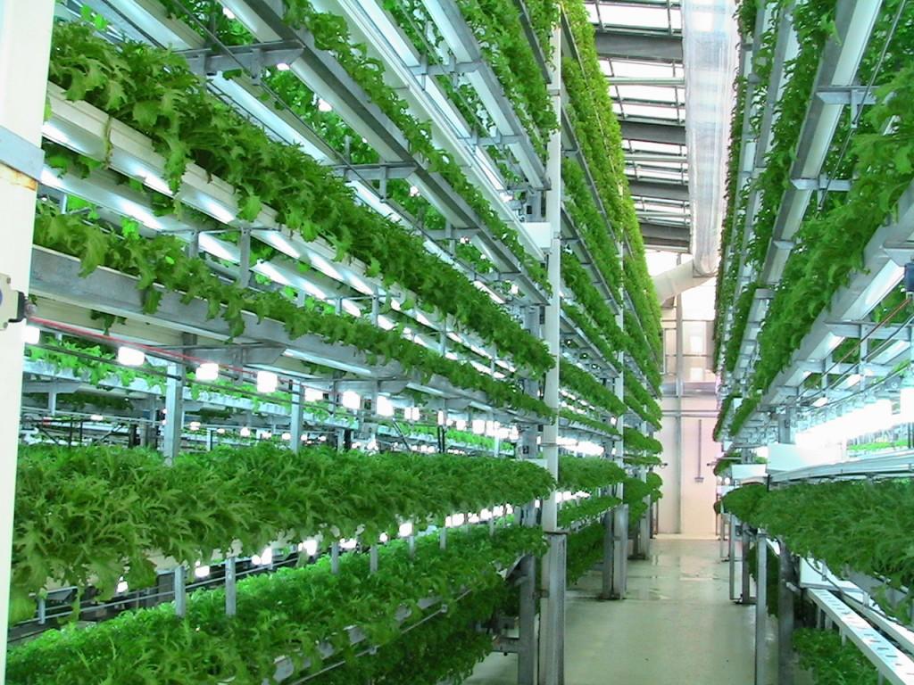 الزراعة المائية في العالم العربي