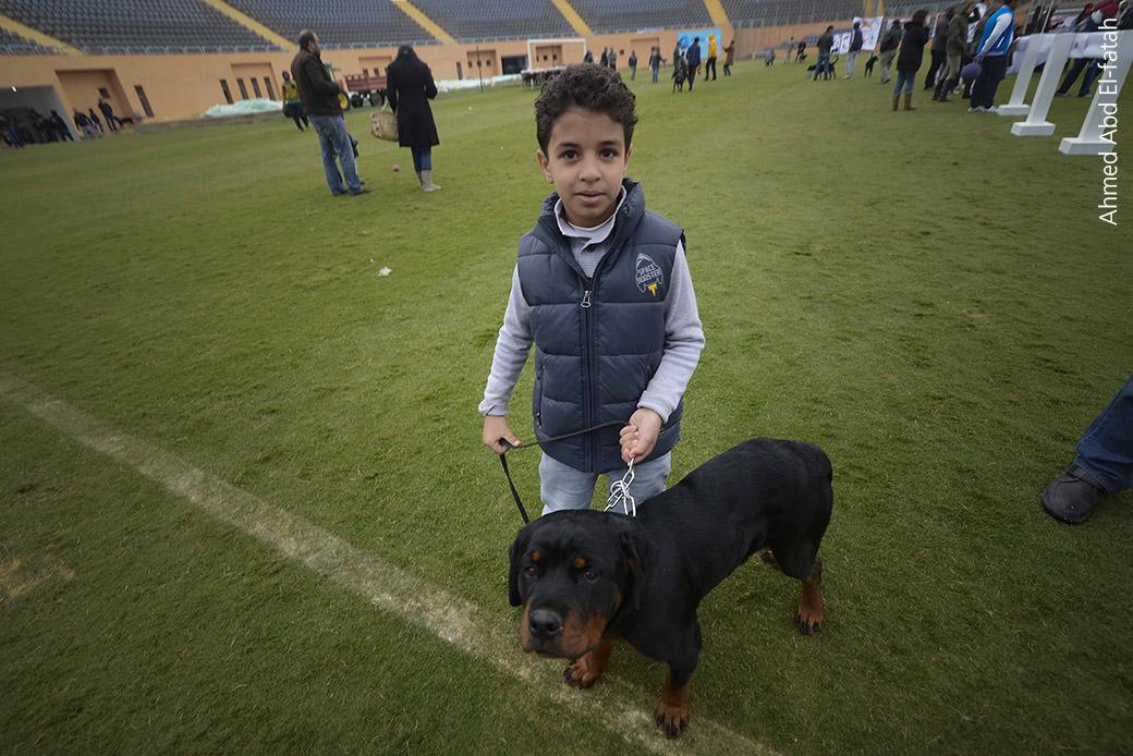 امن مصر في عهدة كلاب الحراسة