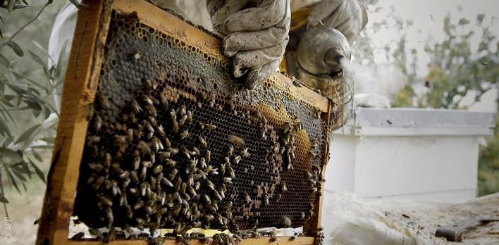 تربية النحل في لبنان من مهنة تدرّ دخلاً إلى هواية