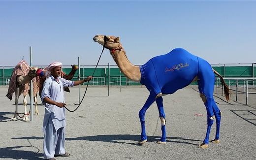 الأحصنة والجِمال تلبس ثياباً رياضية أيضاً