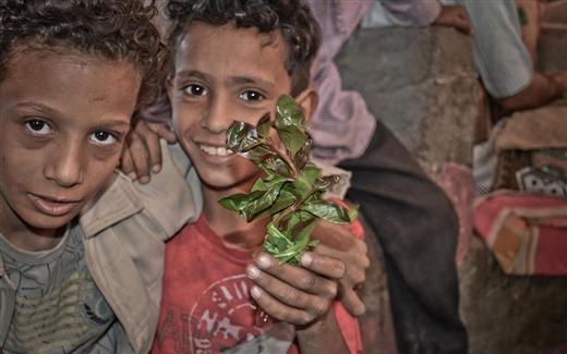 """اليمن، دولة """"القات"""""""