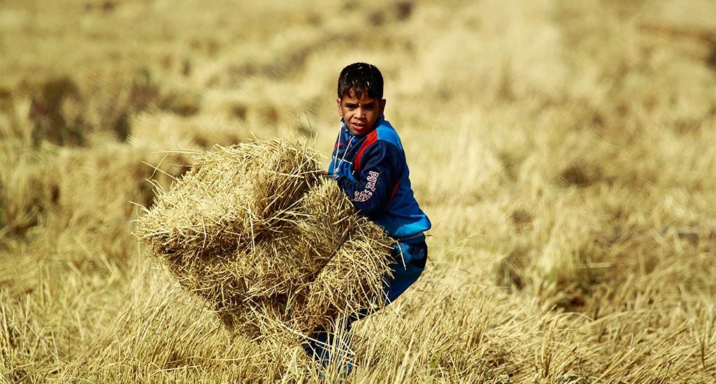 """العراق يخسر 60% من مساحات زراعة الأرز  و""""العنبر"""" يهرّب للخليج"""