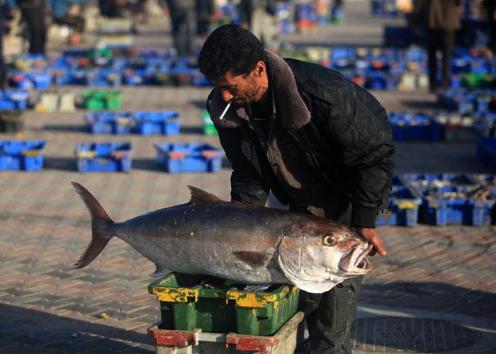 صيد السمك في غزة - صورة 1