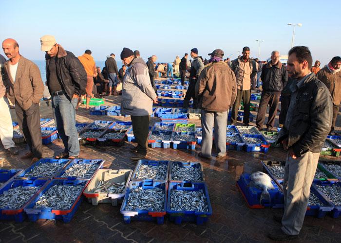 صيد السمك في غزة - صورة 3