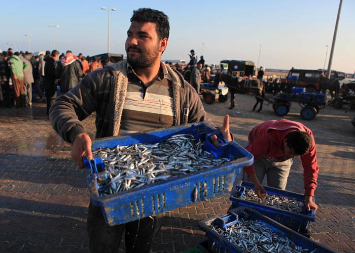 صيد السمك في غزة - صورة 5