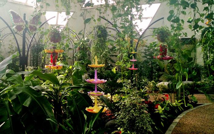 حديقة العجائب .. حديقة دبي للفراشات في قلب صحراء دبي - صورة 1
