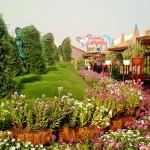 حديقة فراشات في قلب صحراء دبي
