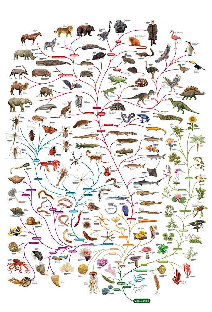صحة نظرية التطور .. هل نحن أحفاد القرود؟