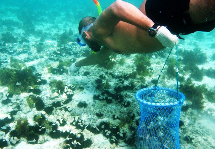 زيارة البحرين - ماذا تفعل في البحرين إذا زرتها - Aldar-Islands-Beach-Life-Bahrain-Pearl-Diving