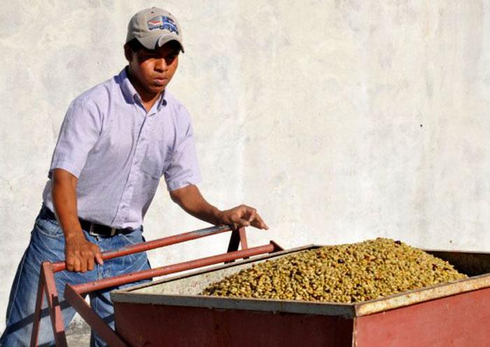 اغلى قهوة في العالم - اغلى أنواع القهوة في العالم Esmerelda