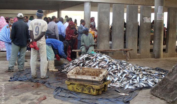 السمك في موريتانيا - ثروة السمك في موريتانيا