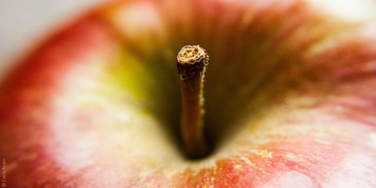 التفاحة في الأساطير الشعبية: من آدم وحواء إلى آبل ماكنتوش