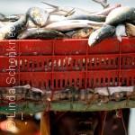 هل يتحقق أمل الموريتانيين في استعادة ثروتهم السمكية؟
