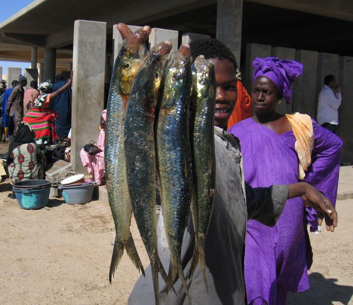 السمك في موريتانيا - سمك