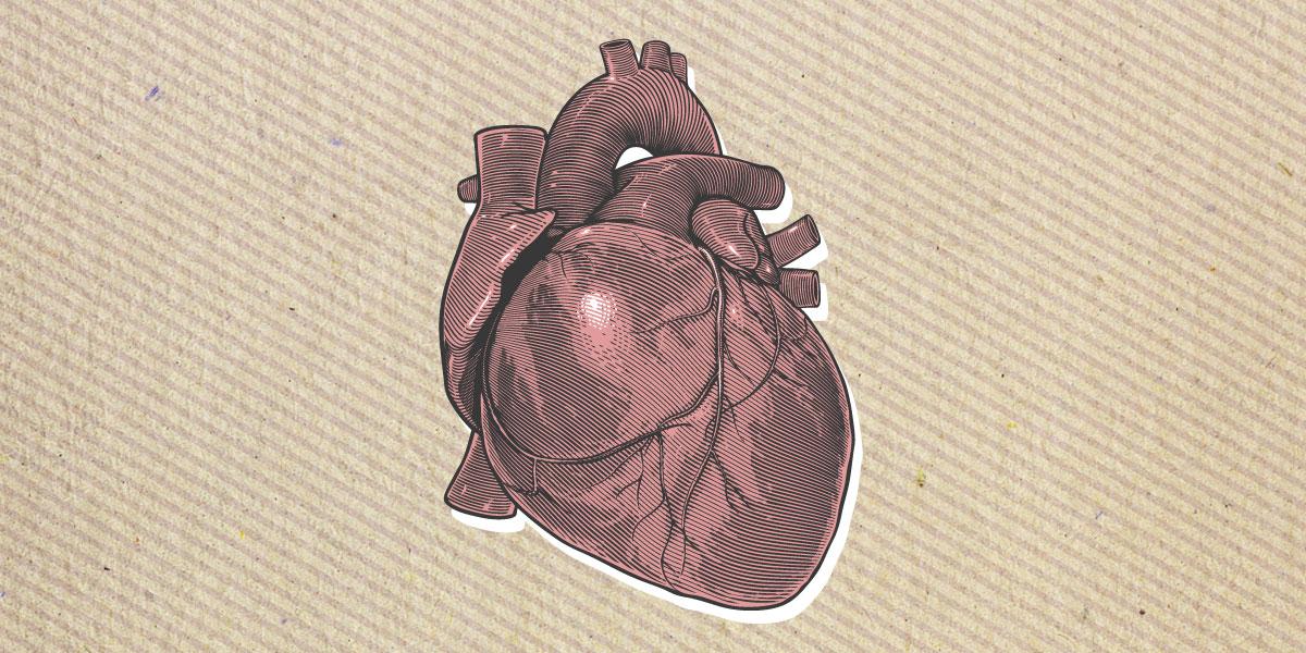 هل يمتلك القلب نظام ذكاء خاصاً به أم أنه مضخة دم فقط؟