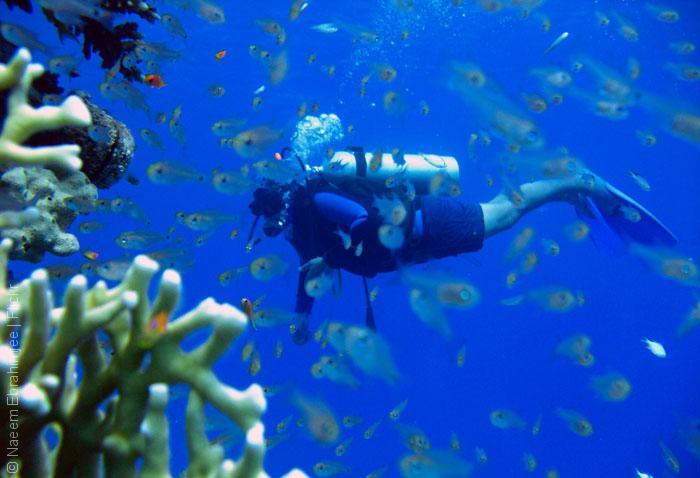 رياضات مثيرة في العالم العربي - الغوص