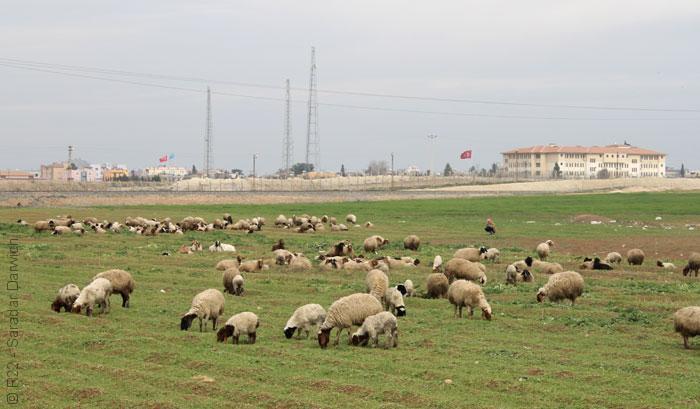 مشاهدات من بلاد أكراد سوريا - صورة 1