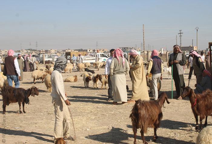 مشاهدات من بلاد أكراد سوريا - صورة 2