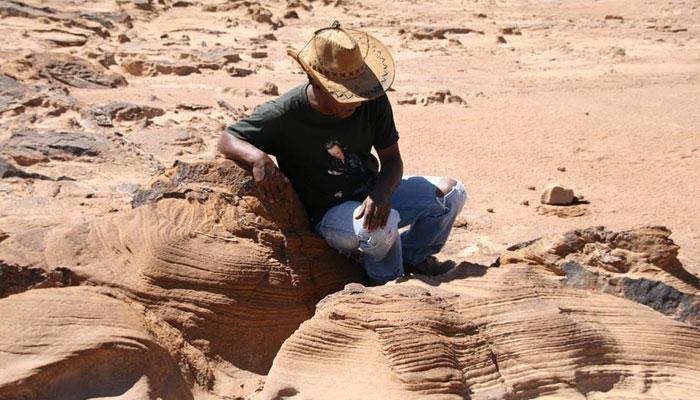 تونس: تجارب فنية رائدة تُثمن الطبيعة المهددة