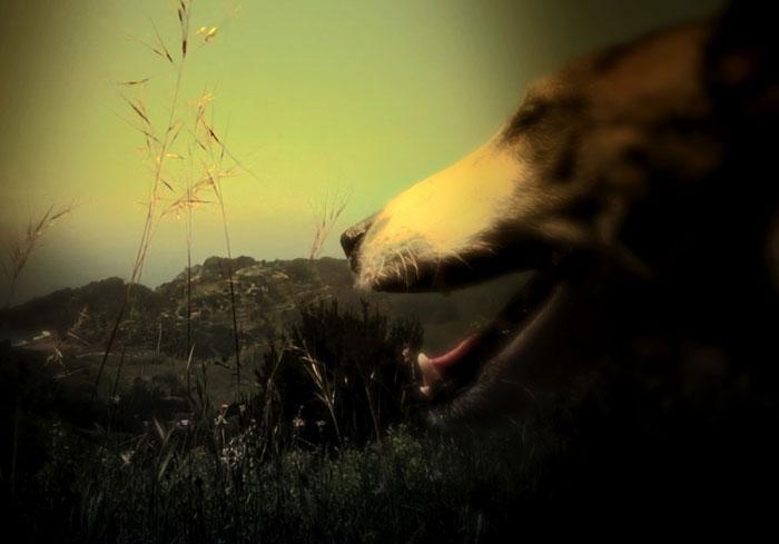 مهرجان فينيسيا 2015 - أبرز الأفلام المشاركة في مهرجان فينيسيا - Heart of a Dog