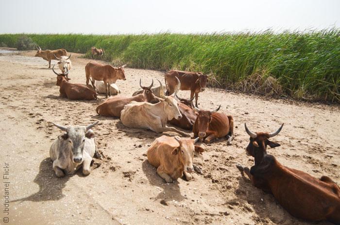السياحة في موريتانيا - حديقة الجاولينغ الطبيعية