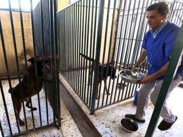 طبيب بيطري أنقذ حيوانات طرابلس الأليفة في خضم الثورة الليبية