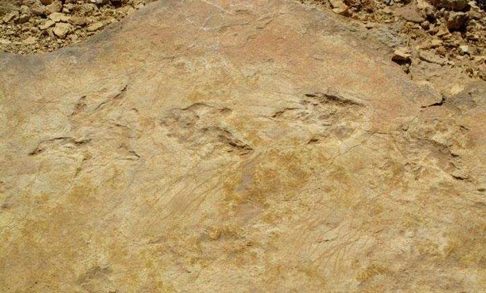 اكتشاف هياكل ديناصورات في جنوب تونس - صورة 2