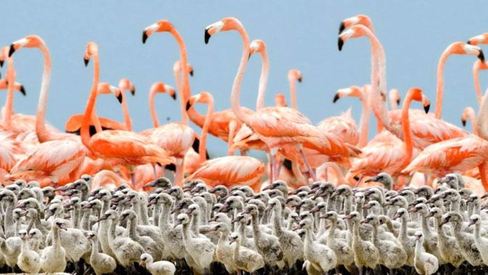روائع الطبيعة في أبوظبي - صورة 2