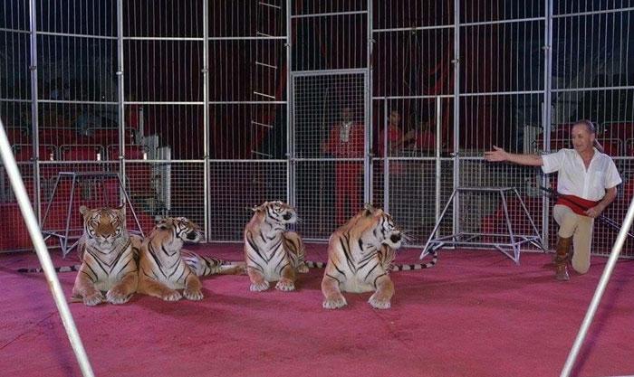 تربية الحيوانات البرية .. دليلك الأول لتبني حيوان بري - مسؤولية الحكومة