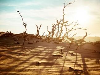"""العالم يواجه التغير المناخي والدور العربي """"مُعرقل"""""""