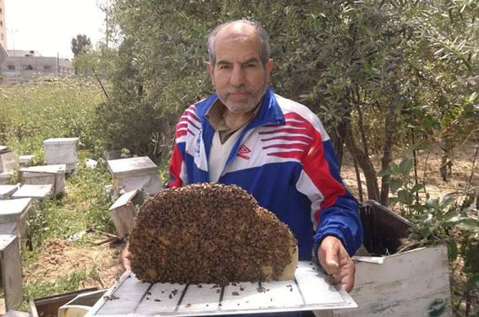 العلاج بلسعات النجل في غزة - العلاج بسم النحل في غزة - صورة 1