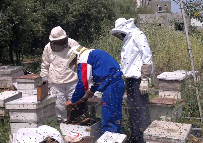 العلاج بلسعات النجل في غزة - العلاج بسم النحل في غزة - صورة 3