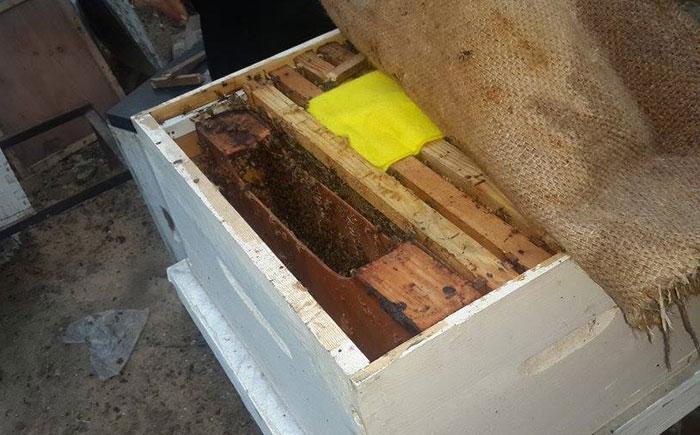 العلاج بلسعات النجل في غزة - العلاج بسم النحل في غزة - صورة 4