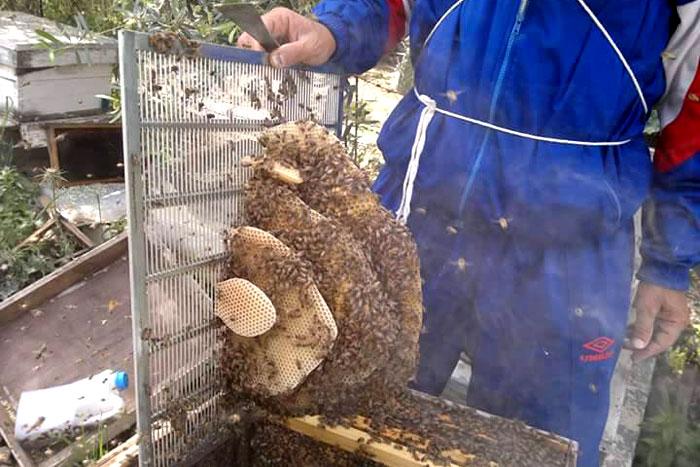 العلاج بلسعات النجل في غزة - العلاج بسم النحل في غزة - صورة 2