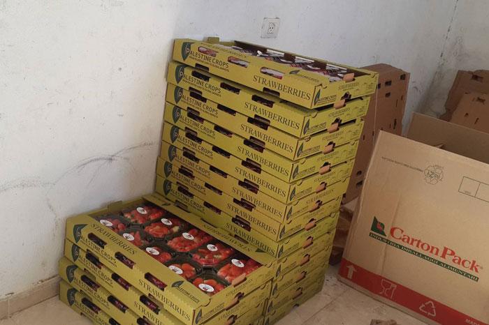 فريز غزة إلى أوروبا .. توت غزة الأرضي يصل إلى الأسواق الأوروبية - صورة 4