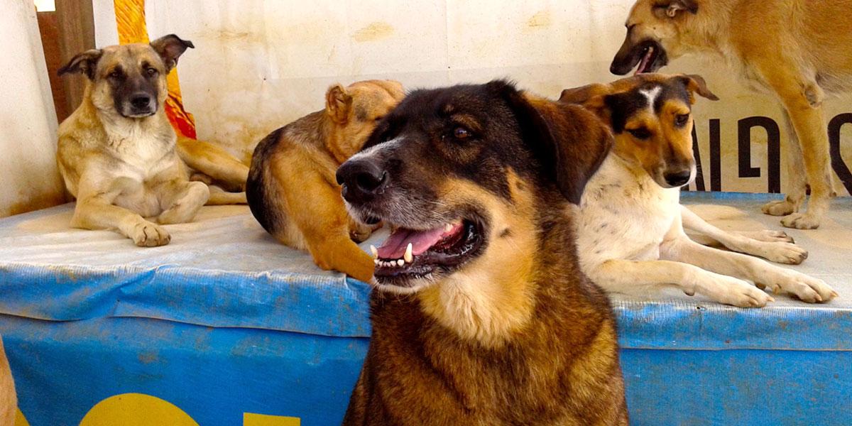 كيف تُعامل الحيوانات الأليفة في العالم العربي؟
