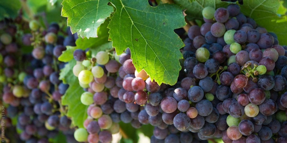 مواطن الخمر السوري وأهله