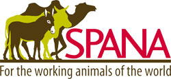 الحيوانات الأليفة في العالم العربي - سبانا