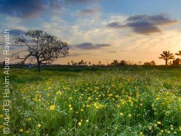 صور من غزة تختلف عما اعتدتم رؤيته