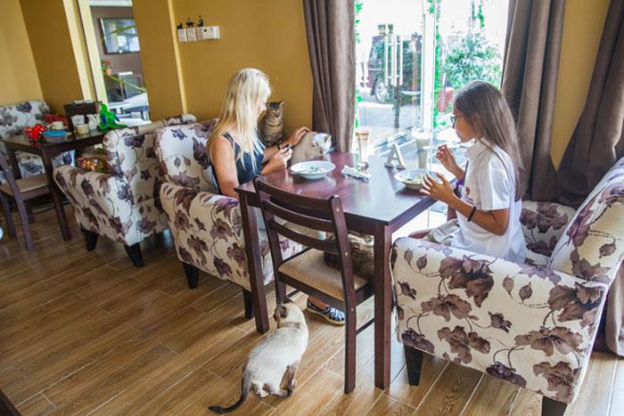 افضل مقاهي دبي - افضل مطاعم دبي - مقهى أيلورومانيا