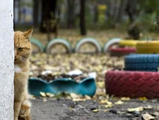 نظريات المؤامرة الإسرائيلية بحيواناتها الجاسوسة
