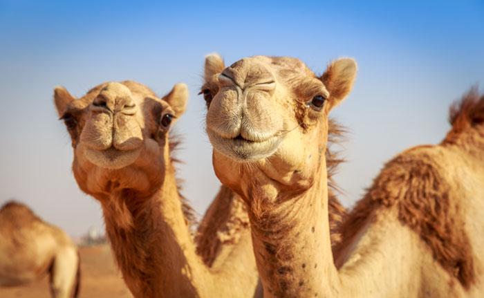 انشطة سياحية في دبي - جمال