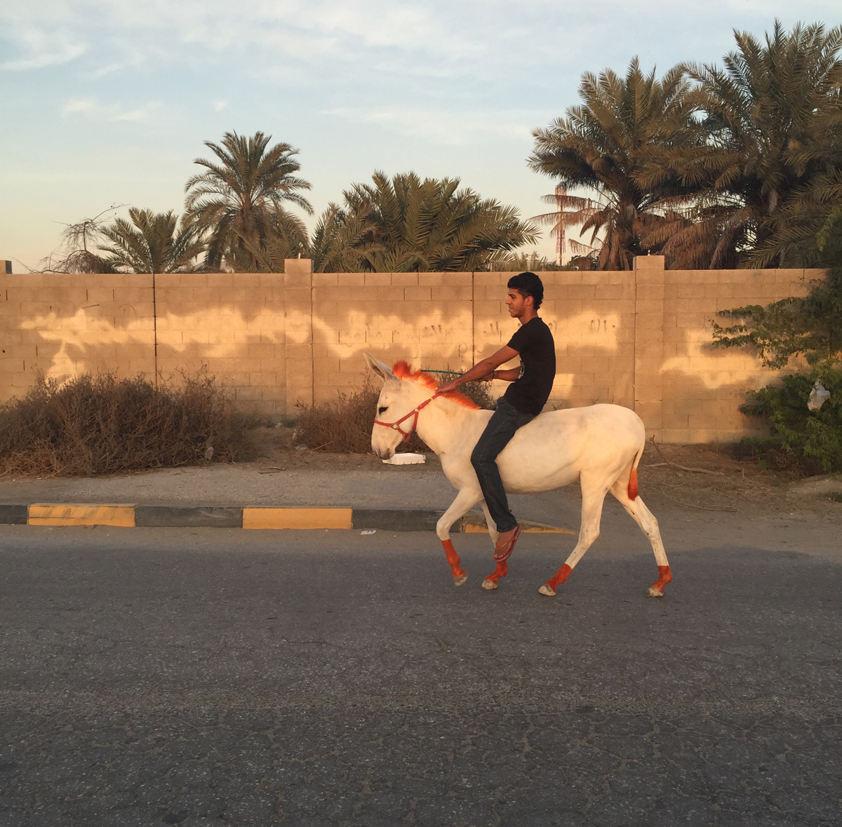 حسين الموسوي ومريم العرب - طفل على حمار