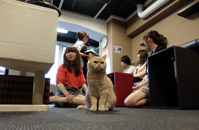 Calico-cat-cafe-room-shot