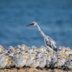 روائع الطبيعة في البحرين بالصور: مصورون أغرتهم الطيور فتحولوا لنشطاء بيئيين