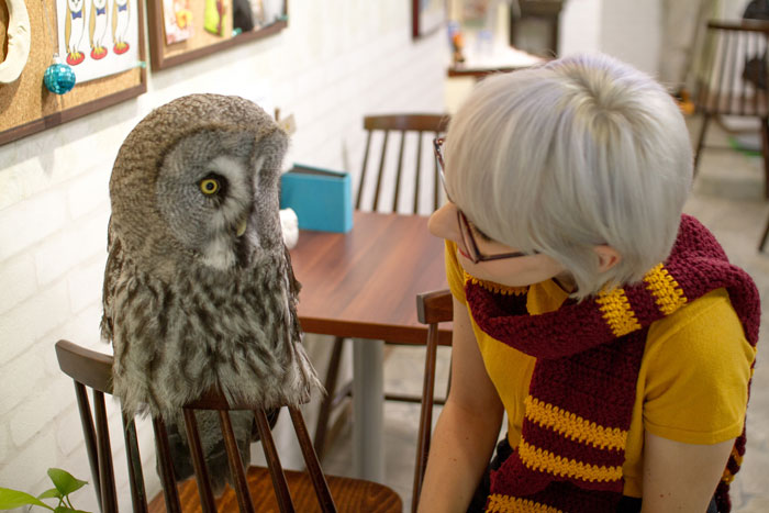 Owl-Cafe