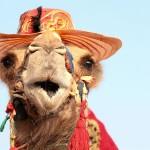 لا تدعوا لهيب صيف دبي يحبط عزيمتكم!