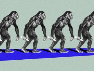 التحريمات الجنسيّة في عالم القرود والبشر